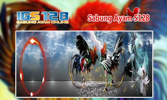 Agen S1288 Taruhan Adu Ayam Online Live Streaming